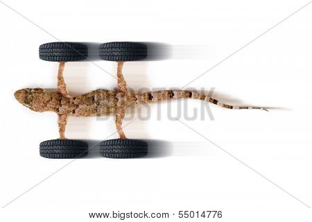 Adhere new tires speed - Gecko and tires in high speed on white background