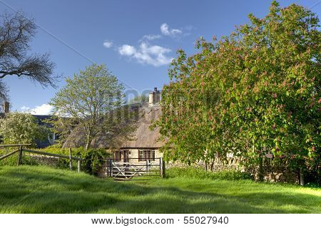 Cotswold Cottage In Spring