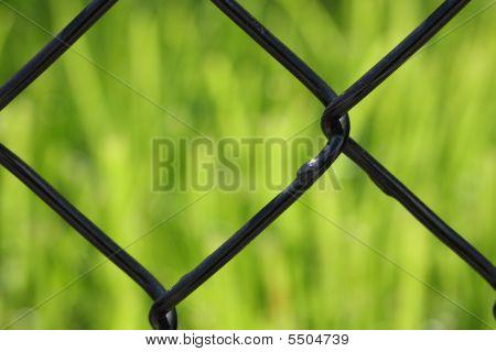 Grass, Fence