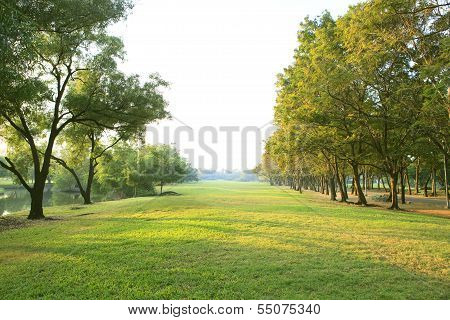 Morning Light In Public Park With Tree Plant Green Grass Field Use As Natural Background Backdrop Or