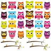 Vector Collection of Cute Owls and Seasonal Branches poster