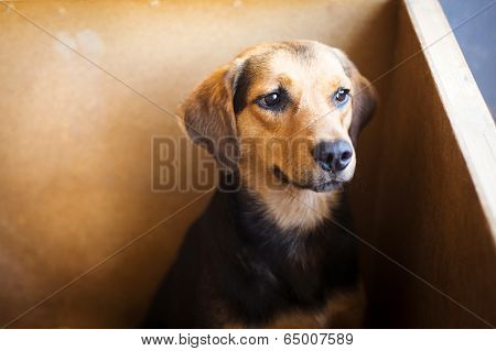 Dog in shelter