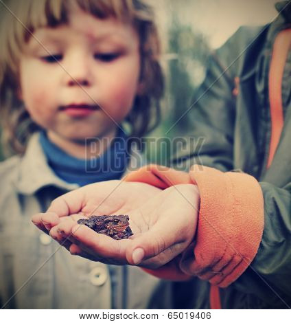 children see a toad found in the forest (focus on toad)