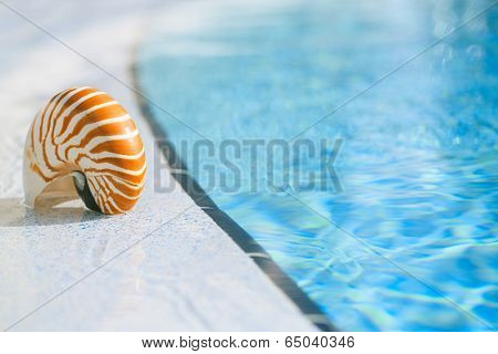 nautilus shell at resort swimming pool edge,  shallow dof