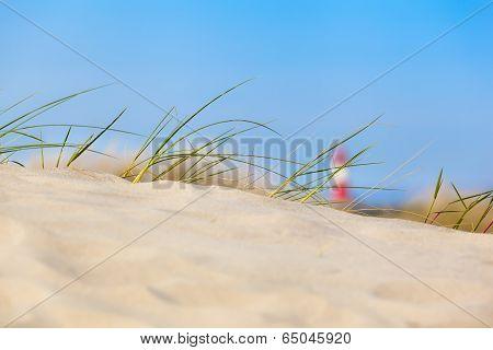 Sand Dune View