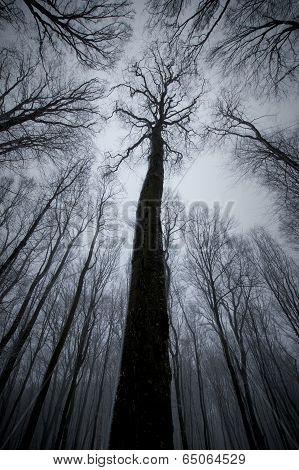 Tree in dark forest on Halloween