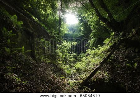 Jungle with vegetation and valley
