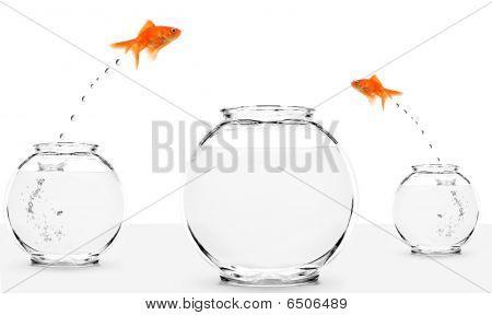 Two Goldfish Jumping To Bigger Fishbowl
