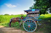 The horse carriage, main transportation in Bagan, Myanmar poster