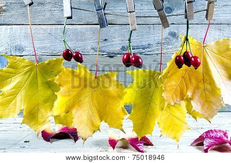 Autumn Atmosphere With Leaves