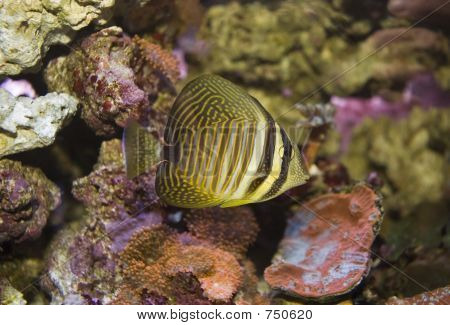 Ange lFish 2