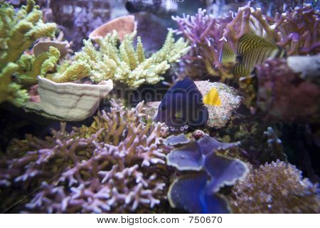 Fish on coral reef poster