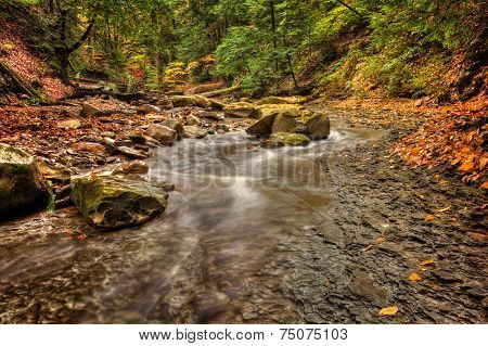 Forest Stream In Autumn