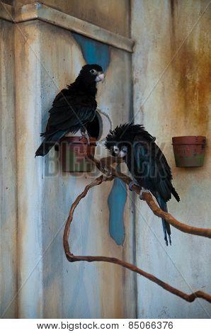 Vasa Parrots