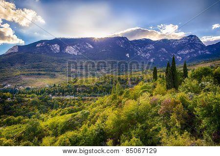 Mountain slopes and grape in Crimea
