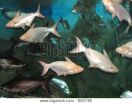 Underwater world, fish and more... poster