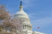 Washington DC in Spring - The Capitol dome among the tree blossoms poster