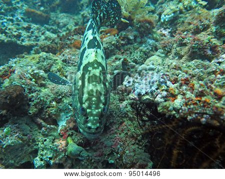 Thriving  Coral Reef Alive With Marine Life And  Fish, Bali.