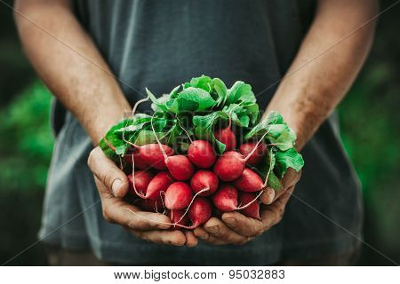 Farmer With Vegetables