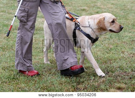 Blind Person Walking With Her Guide Dog