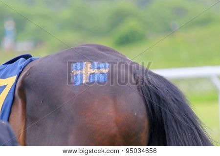 Swedish Flag Painted On A Ponny