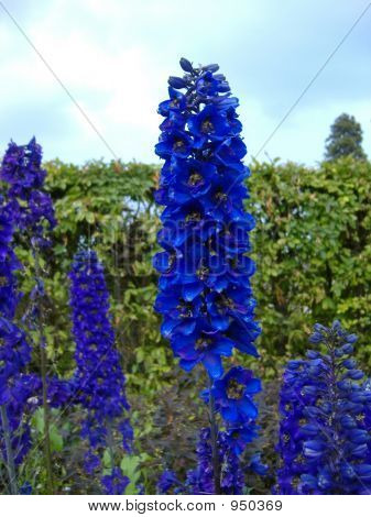 Bluerods