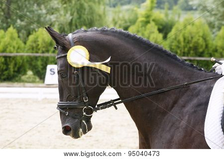 Head Of A Award-winning Horse In The Arena
