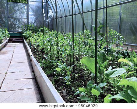 Growing Vegetables In Greenhouses
