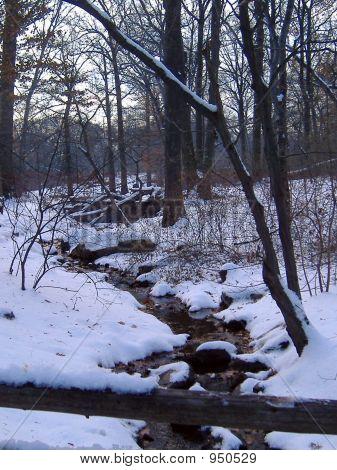 Snowyforest
