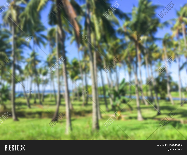 Tropical Landscape Image & Photo (Free Trial) | Bigstock
