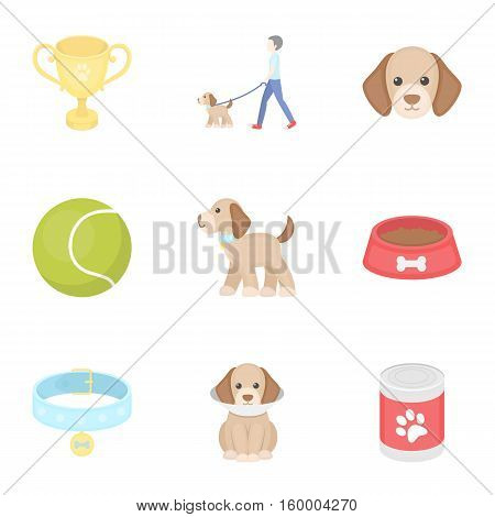 Dog equipment set icons in cartoon style. Big collection dog equipment vector symbol stock