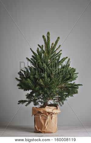 Little fresh Christmas tree in a pot wrapped in craft paper isolated on gray Ready for custom decoration