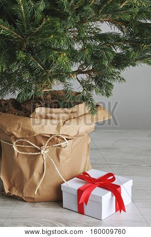 Close up shot of a white and red gift box next to a pot with a beautiful Christmas tree on white background