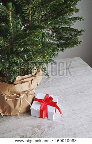 Small present in a white box with red sateen ribbon under beautiful danish Christmas tree in a pot wrapped in craft paper on light gray background.