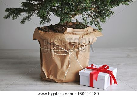 Pot with a Christmas tree wrapped in paper next to a cute present in a white box with a red ribbon on wooden floor next to a white wall.