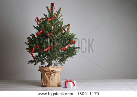 Tabletop green and fresh Christmas tree with ribbon decoration and a small present in a white box with a red bow on light gray background