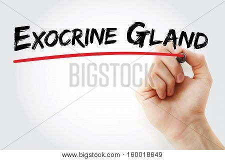 Hand Writing Exocrine Gland With Marker