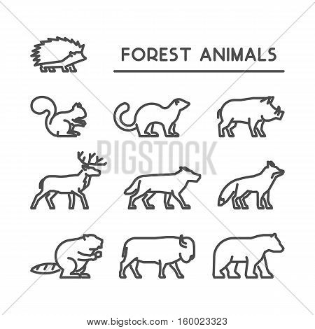 Linear vector icon set of wild animals on white background. Line silhouettes boar squirrels deer beaver fox puma wolf hedgehog and bear.