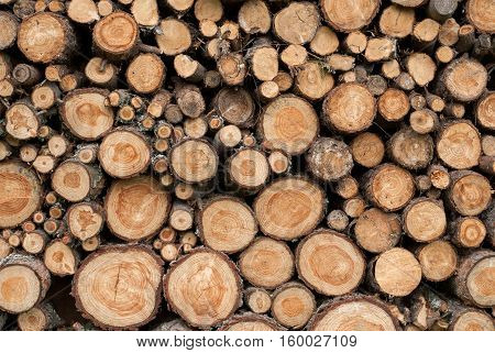 Wooden Logs - Top View