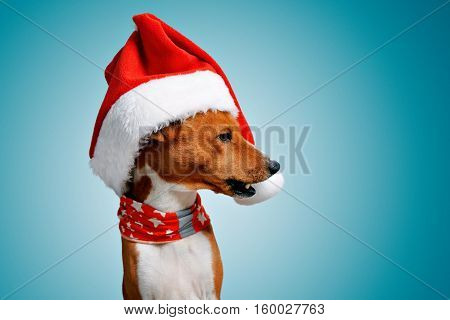 Close up portrait of funny beautiful dog wearing christmas santa hat looking on side with opened mouth, isolated on cold blue background