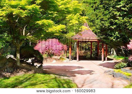 Japanese Garden In Point Defiance Park. Tacoma, Wa