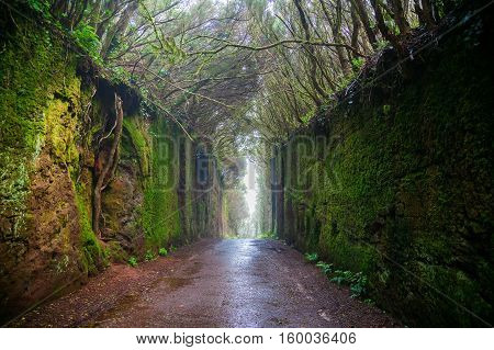 Fabulous Tunnel In The Rural Park Anaga