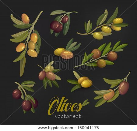 Set of olive branches or tree twigs berries. Nature olive oil leafs isolated, berry fruits for salad ingredients. For agriculture or painting theme, vegetarian olive drink, bottle sticker with branches