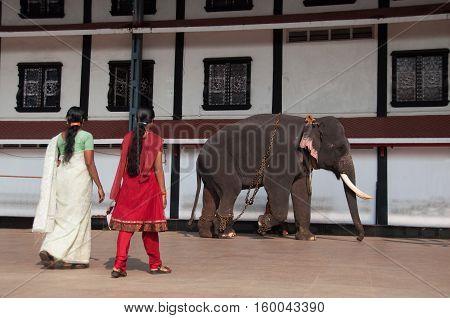 An elephant at a hindu temple walking