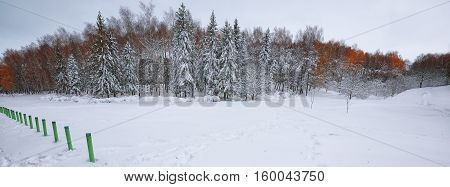 Winter scenery of snowcovered trees in city park. Lots of snow