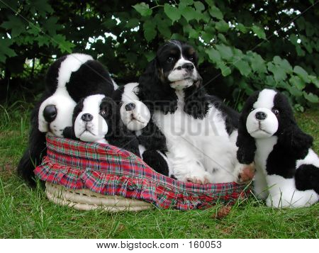 poster of american cocker spaniel in a basket with stuffed look a likes.