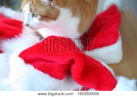 Orange and white tabby cat rests on colorful holiday hats.