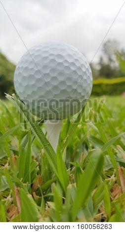 Macro shot of a golf ball in the fairway grass