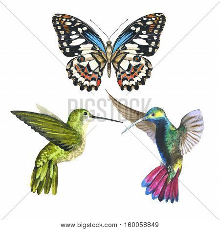 Sky bird colibri anf butterfly in a wildlife by watercolor style isolated. Aquarelle bird and butterfly for background, texture, pattern, frame, border or tattoo.