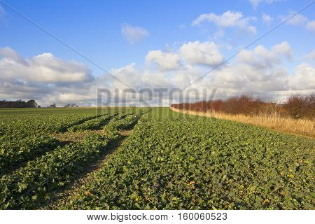 Arable Crops In Autumn
